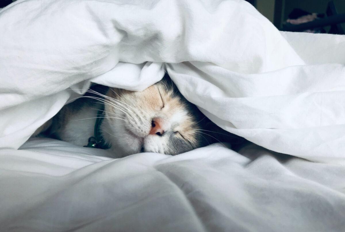 kadın girişimciler uyuyan kedi