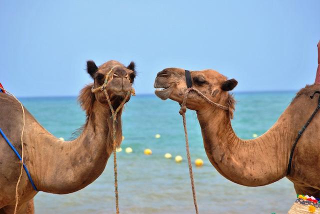 gezi blogları tatil develer